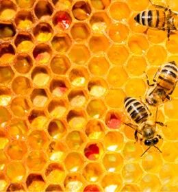 Api Bee Feed Image