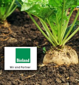 Organic Beet Sugar in Bioland Quality Image