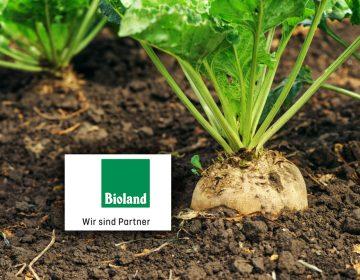 Bio-Rübenzucker in Bioland-Qualität Image