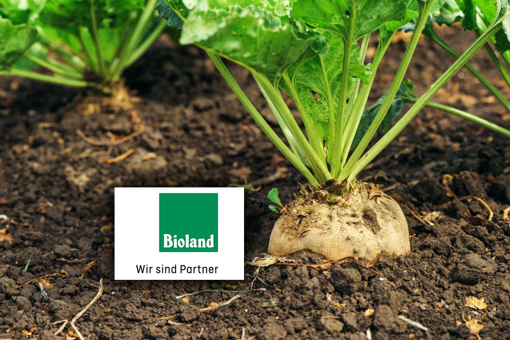Sucre Bio de Betterave avec label Bioland Image