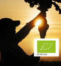Get to know Südzucker's Organic Beet Sugar Image