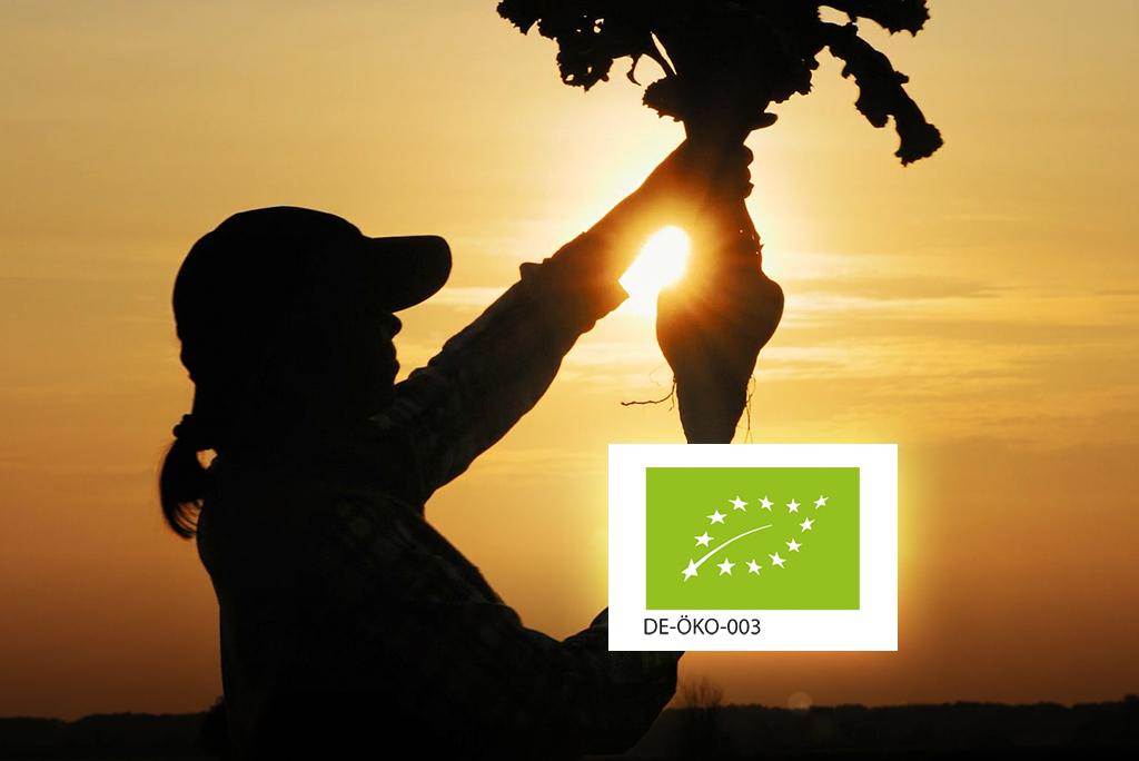 Erfahren Sie spannende Hintergrundinformationen über den Bio-Rübenzucker von Südzucker Image