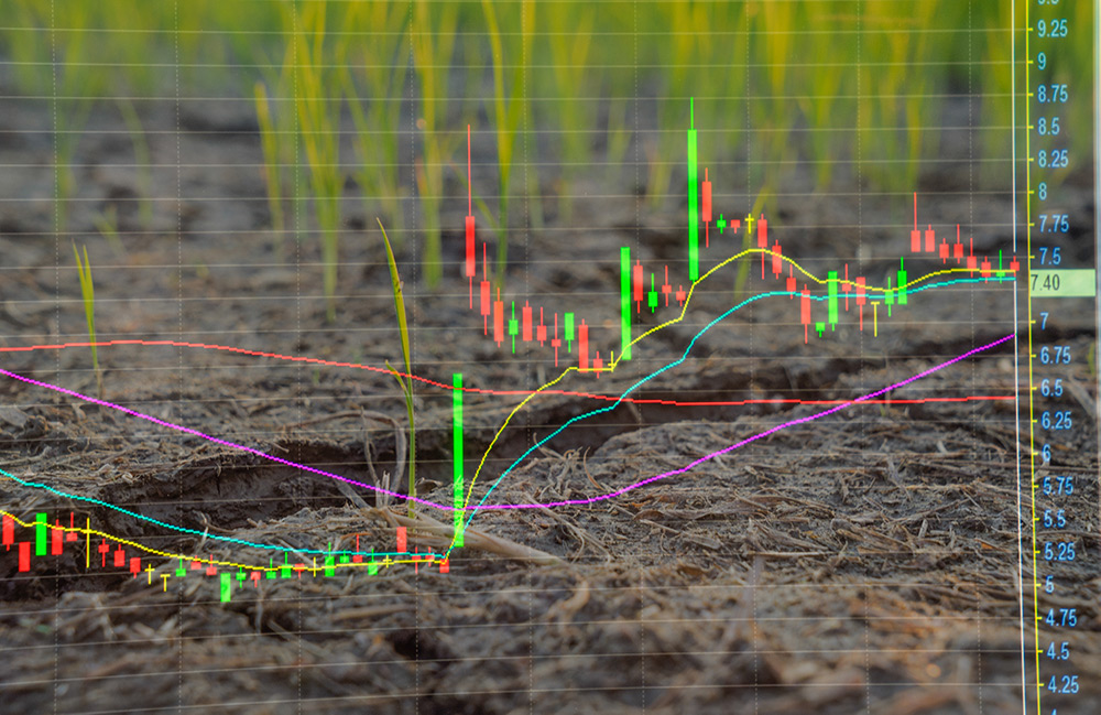 World sugar market price signals may promote better decision-making Image